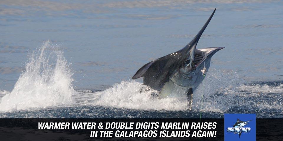 fishing reports 20180906 marlin tuna wahoo swordfish ecuador galapagos manta 00