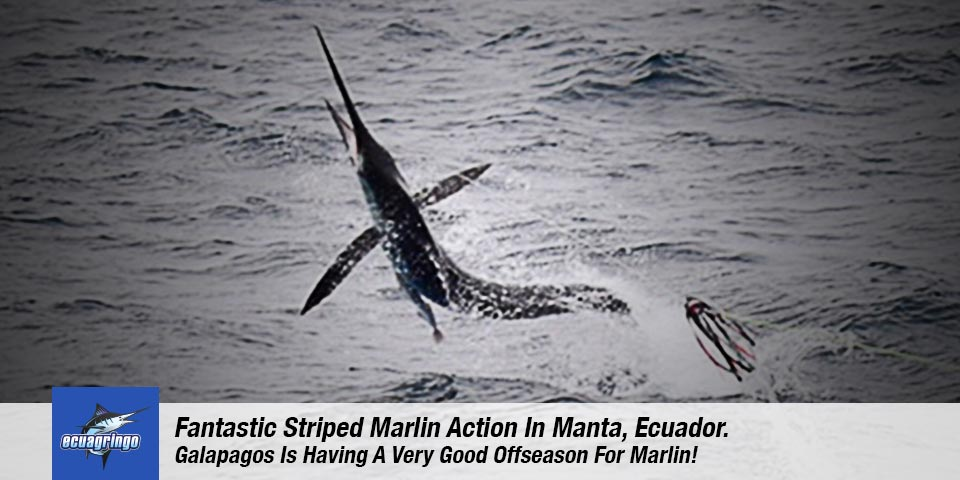 fishing reports 20180917 marlin tuna wahoo swordfish ecuador galapagos manta 00