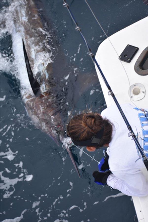 fishing reports 20180923 marlin tuna wahoo swordfish ecuador galapagos manta 02