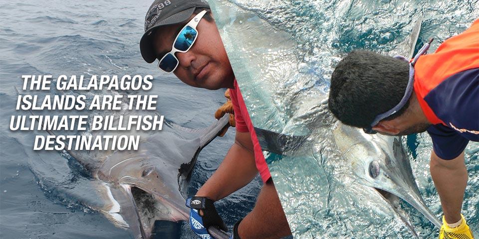 promotion 20180902 marlin tuna wahoo swordfish ecuador galapagos manta 00