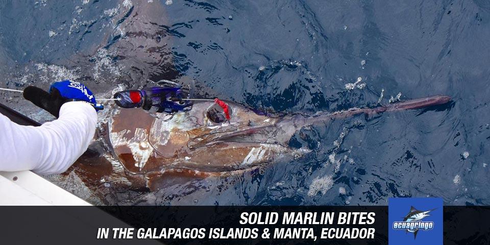fishing reports 20181012 marlin tuna wahoo swordfish ecuador galapagos manta 00