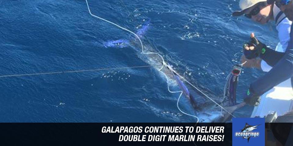 fishing reports 20181023 marlin tuna wahoo swordfish ecuador galapagos manta 00