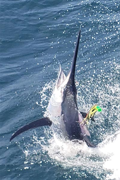 marlin fishing report 20181130 03