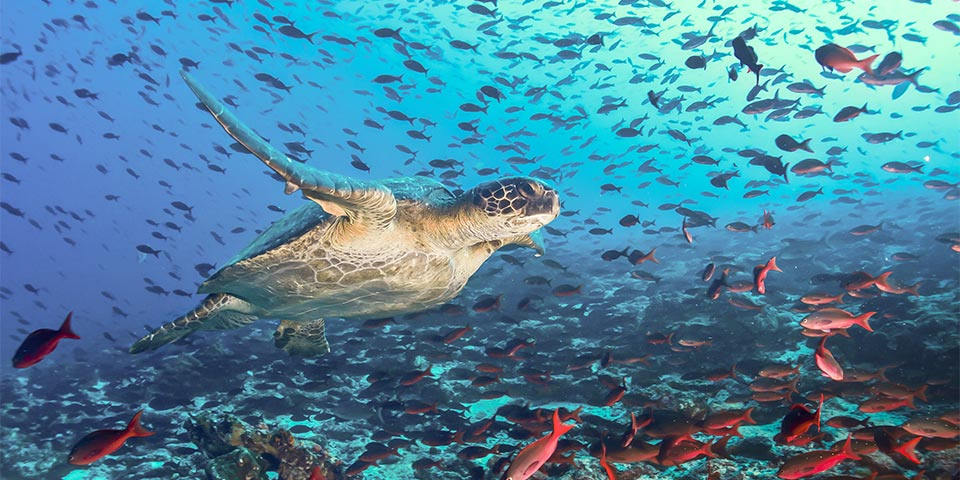 turtle galapagos under sea 01