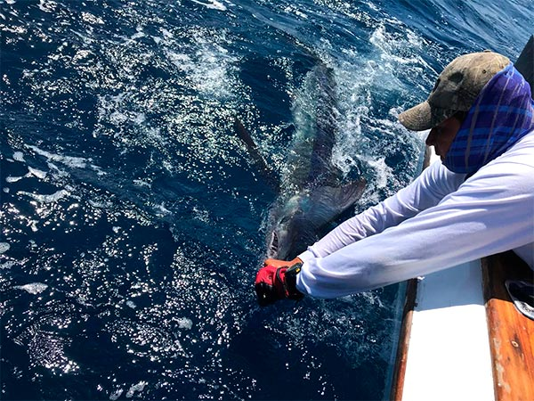 promotion 20190110 marlin fishing 01