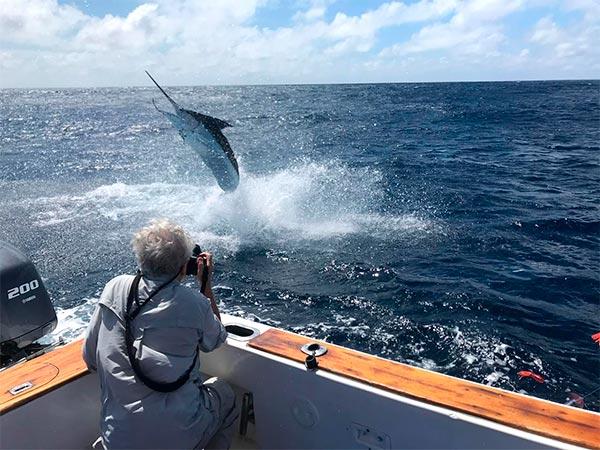 promotion 20190110 marlin fishing 02