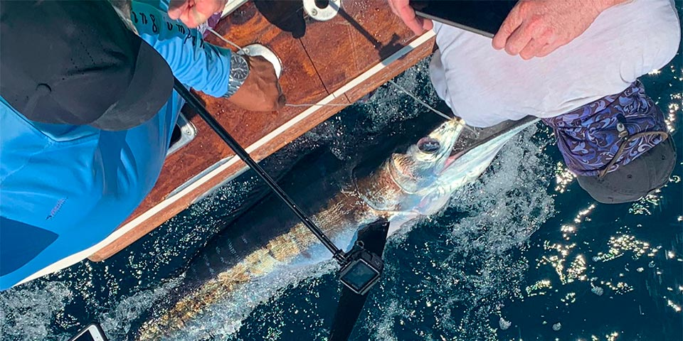marlin fishing report picture 20190325 01