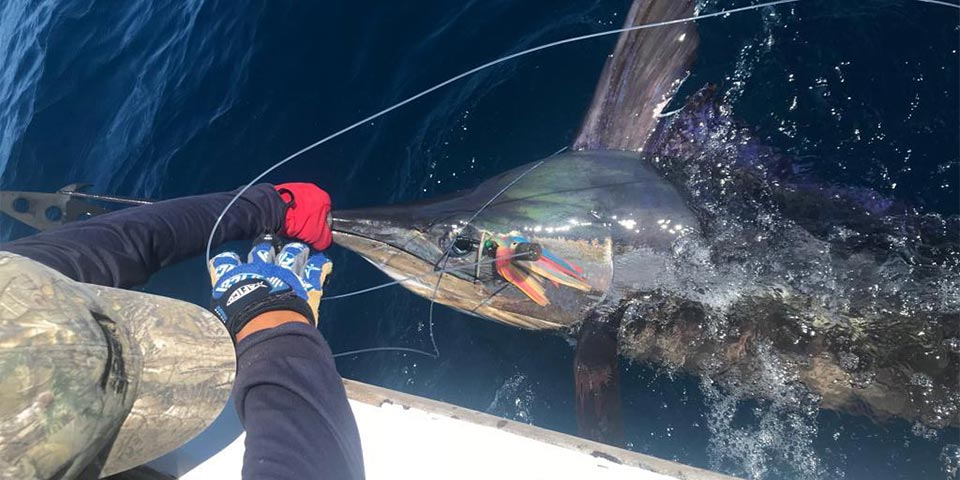 ecuagringo marlin fishing report 20190827 01