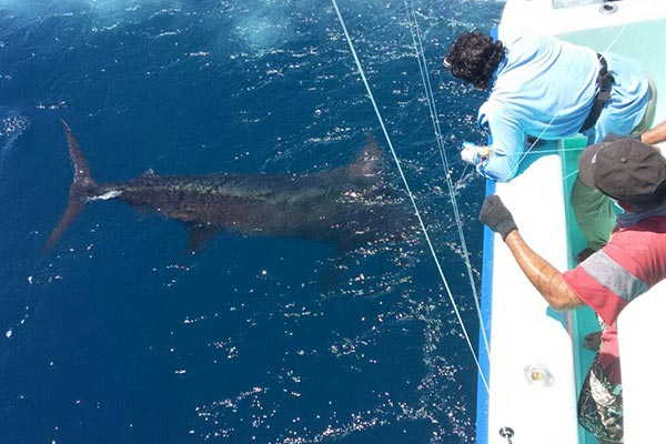 promotion marlin fishing 20191103 02