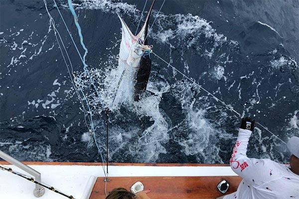 ecuagringo marlin fishing report 20191230 04