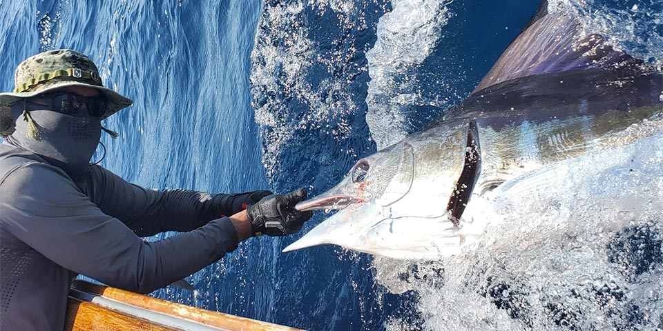 ecuagringo marlin fishing report 20200205 01
