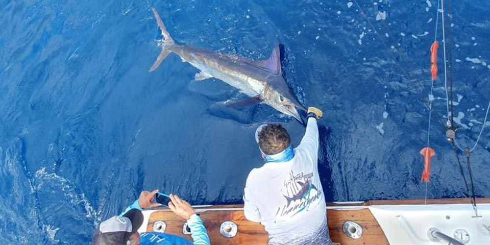 ecuagringo marlin fishing report 20200218 01