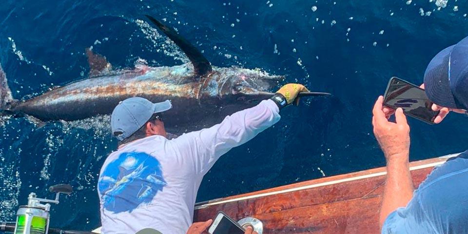 Giant Blue Marlin Fishing Isabela Island 2021