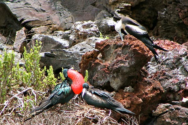 blog galapagos birds 20200522 01