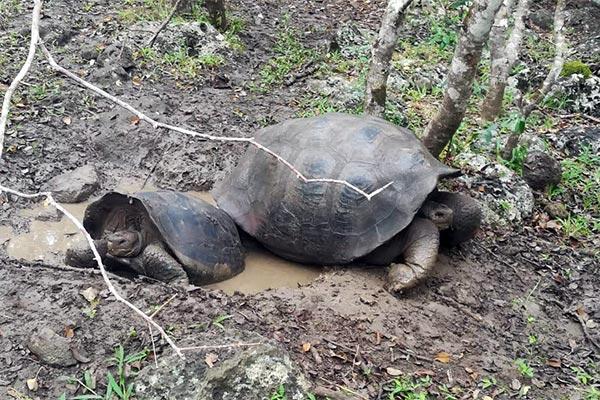 blog galapagos turtle 20200520 01