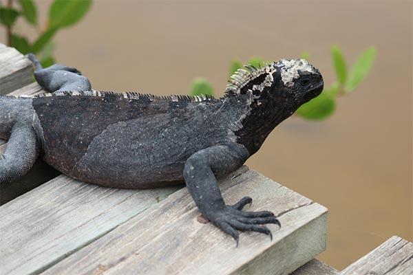 blog galapagos wildlife 20200513 02