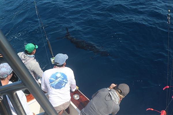 blog marlin fishing 20200513 01