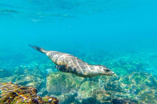 blog galapagos islands sea lion 20200608 01