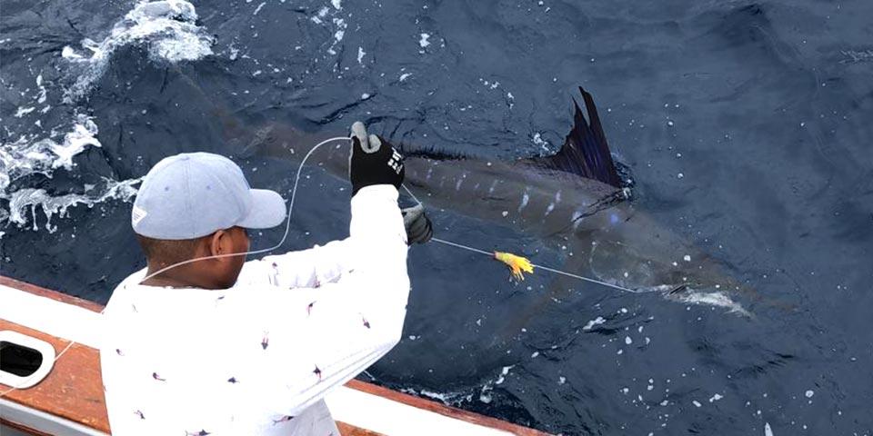 blog marlin fishing galapagos islands 20200724 01