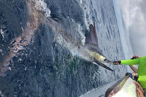blog fishing galapagos islands 20200908 03