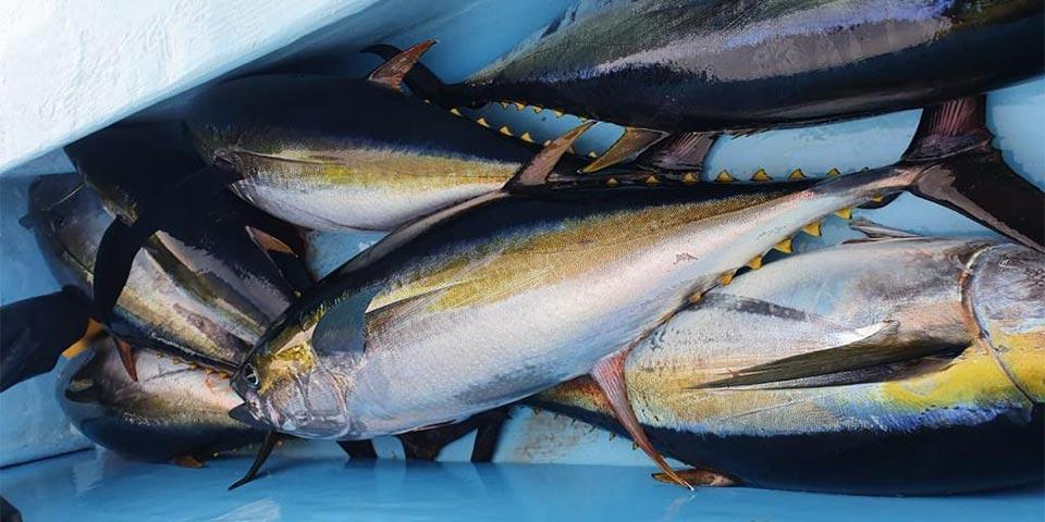 fishing reports 20201107 ecuagringo galapagos 01