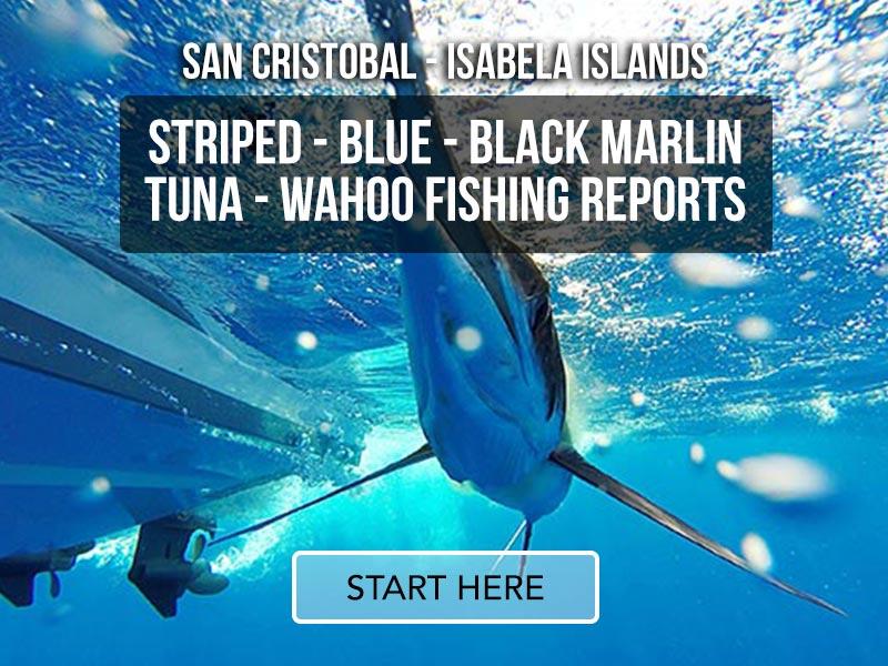 ecuagringo marlin fishing reports 01