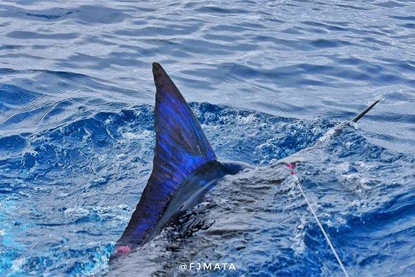 promo marlin fishing 20210306 02
