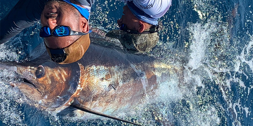 Isabela Island Shared Boat For 7 Days Giant Blue Marlin Fishing, Galapagos Islands
