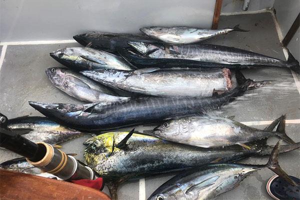 special shared fishing galapagos 20210908 03