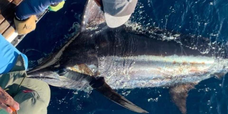 marlin fishing galapagos san cristobal 02