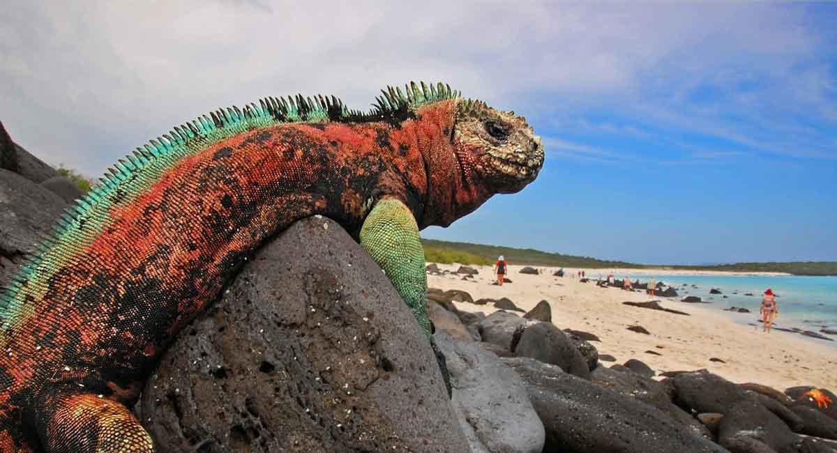 """Tour a Galapagos """"las islas encantadas"""""""