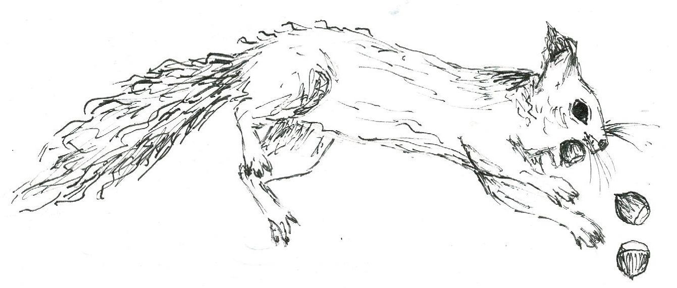 ÉcureuilSaveurs