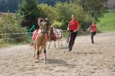 cours cheval st etienne firminy 42
