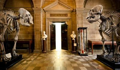 Image result for anatomical museum edinburgh
