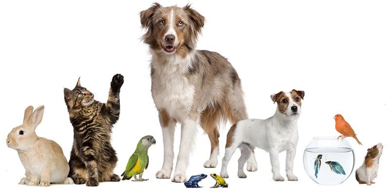 هل تعلم 20 معلومة مثيرة عن الحيوانات والطيور