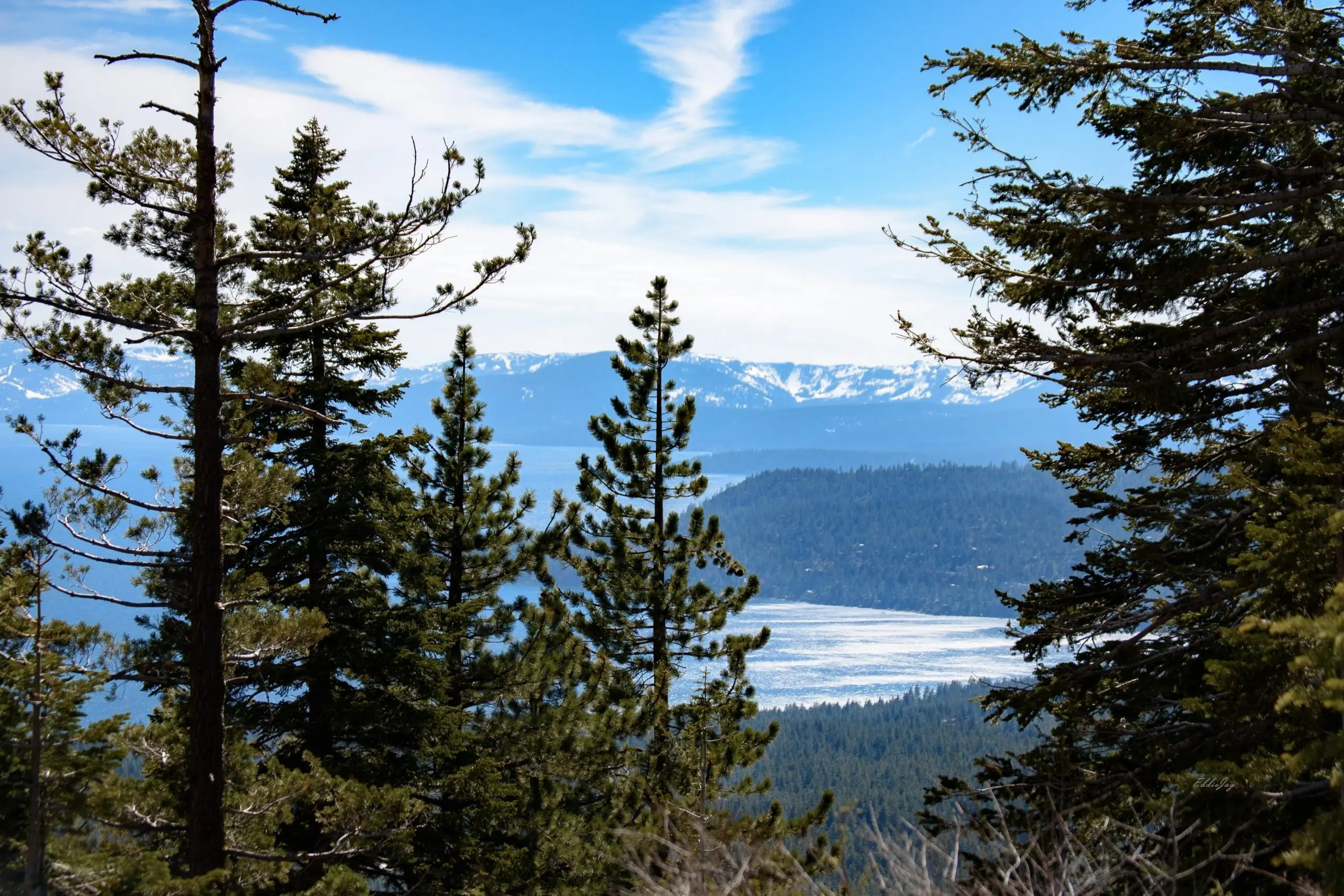 Panoramic view of Lake Tahoe through the frames of tall pine trees in the foreground.