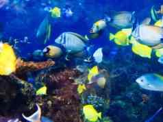 Sterrenbeeld vissen edelstenen