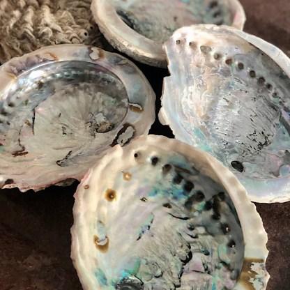 abalone schelpen middel de sfeermakers 1