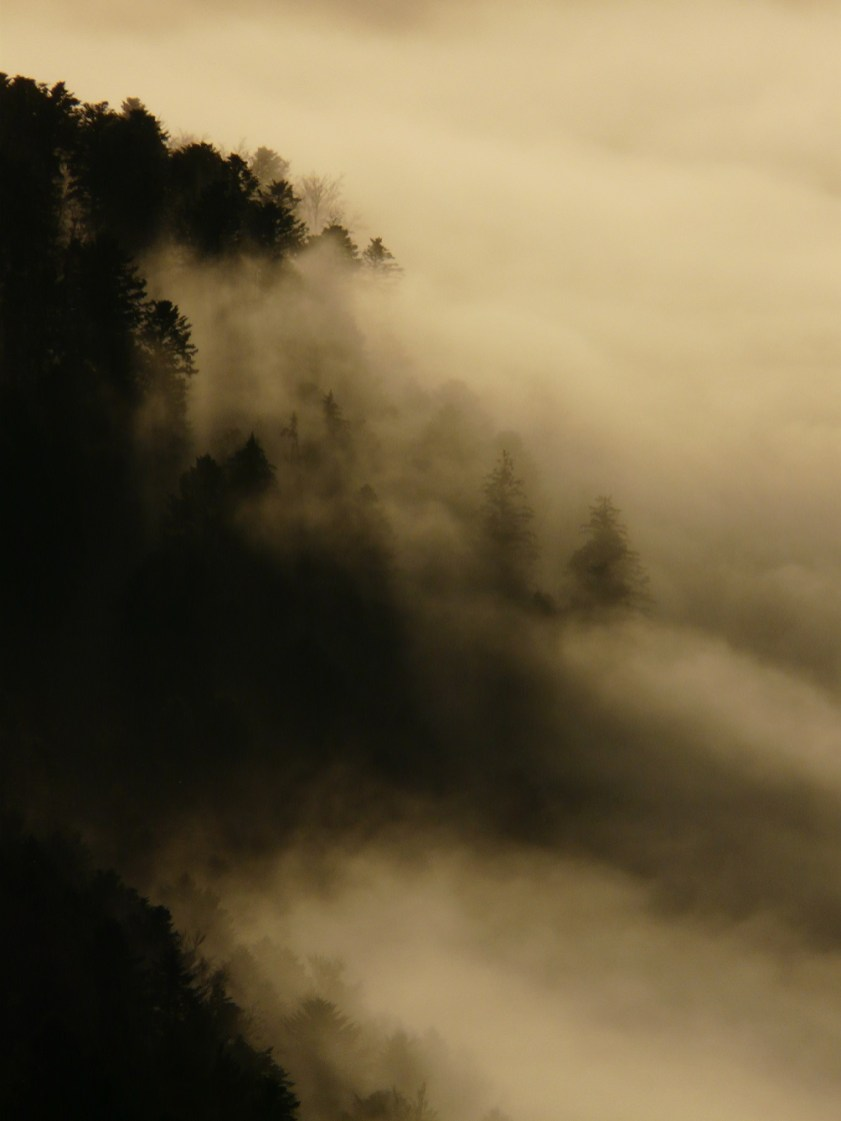 Petit à petit, le brouillard s'insinue entre les sapins...