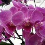 Di quanta luce hanno bisogno le Orchidee?