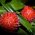 Bromeliaceae, la grande famiglia delle Bromelie