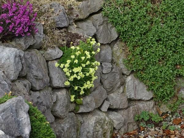 Muretto a secco giardino roccioso