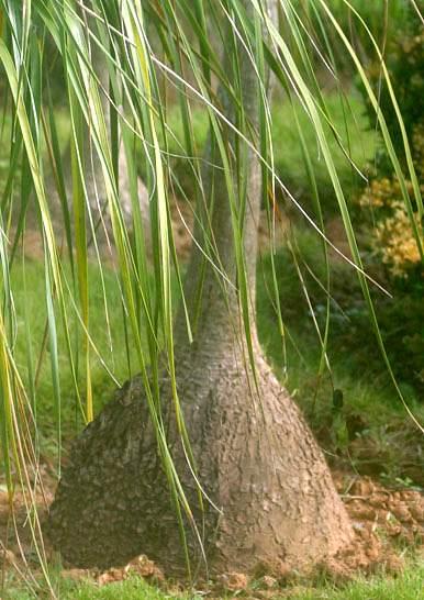 pianta mangiafumo