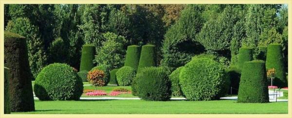 Coltivazione Tasso in giardino