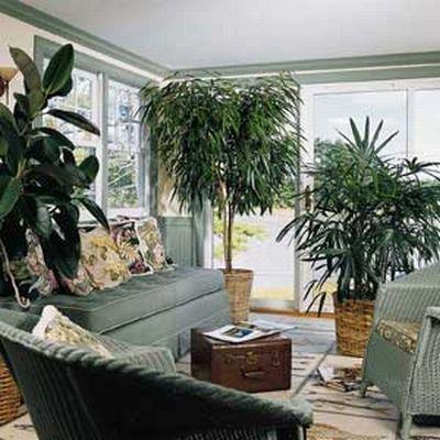 le piante non vanno in vacanza: come curare le nostre piante in casa