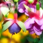 Le malattie della pianta di Fuchsia