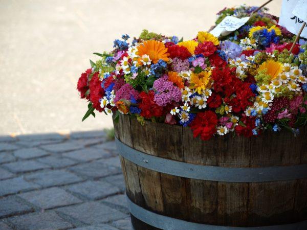 summer-flowers-376764_960_720