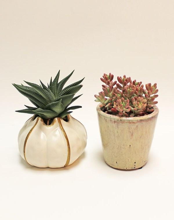 Succulents Set with pots