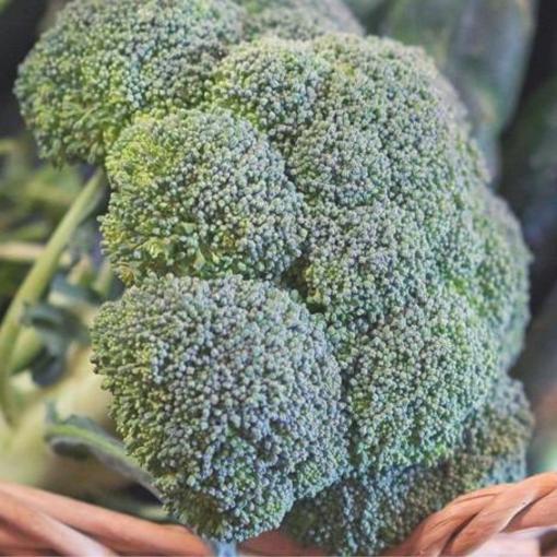 Broccoli (Gypsy)