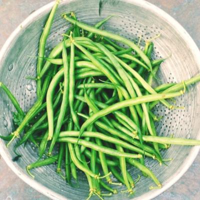 Green Beans (Jade)